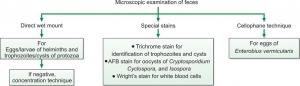 MICROSCOPIC EXAMINATION OF FECES
