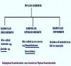 CLASSIFICATION PHYLUM CHORDATE