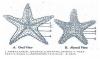 STAR FISH - GENERAL CHARACTERS