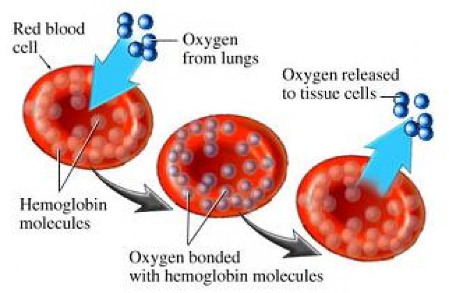 OXYHEMOGLOBIN METHOD FOR ESTIMATION OF HEMOGLOBIN
