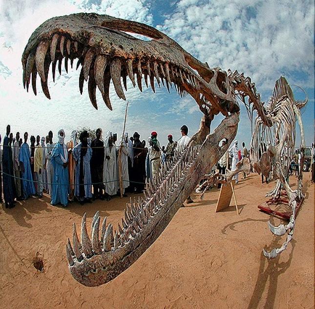 PALAEONTOLOGICAL EVIDENCES OF ORGANIC EVOLUTION
