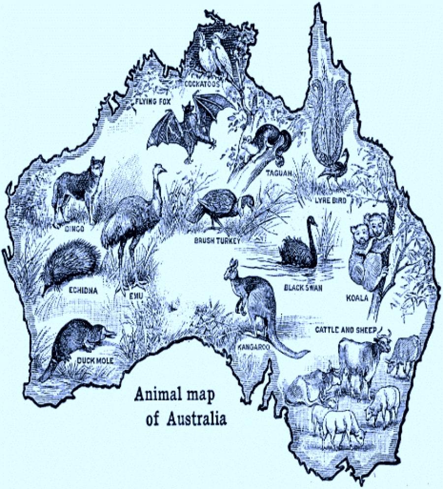 ZOOGEOGRAPHY: AUSTRALIAN REGION