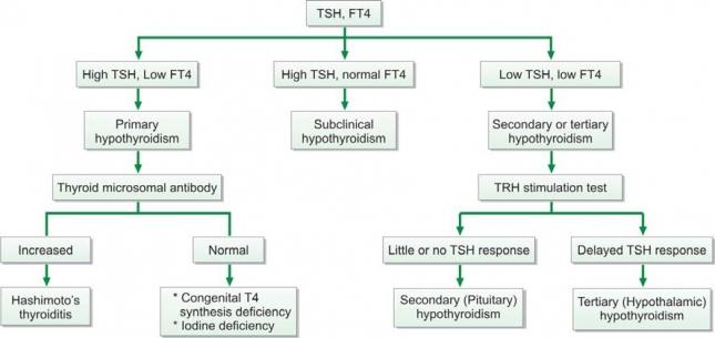 TOTAL THYROXINE (T4)