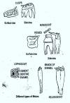 Teeth Modifications in Mammals